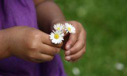 En liten flickas händer som håller i blommor.